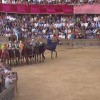 Palio dell'Assunta 17 agosto: vince la Selva (video)