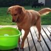 Il più bel gioco per cani: ecco come reagisce Fido (video)