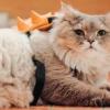 Bone Bone, il gatto con lo zainetto che conquista il web (video e gallery)