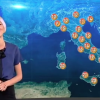 Chi è Ilaria Fratoni, la meteorina di Tg5 e Studio Aperto (fotogallery)